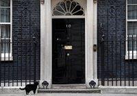 В Британии дипломатам запретили кормить толстого кота