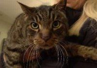 Американка встретила кота, похороненного 10 лет назад