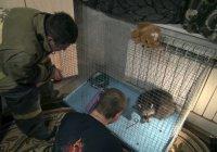 В Омске енота Элли спасли из вентиляционной шахты