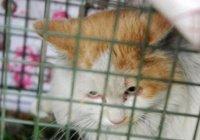 В Китае кота спасли после 2-х лет заточения на шоссе