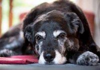 В США собака вернулась к хозяевам через 10 лет отсутствия