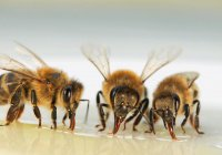 Ученые: Инопланетяне похожи на пчел