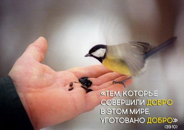 «Скажи Моим рабам, которые уверовали: «Бойтесь вашего Господа! Тем, которые совершили добро в этом мире, уготовано добро»