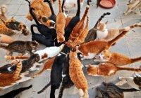 Пенсионер из США поселил у себя 300 кошек