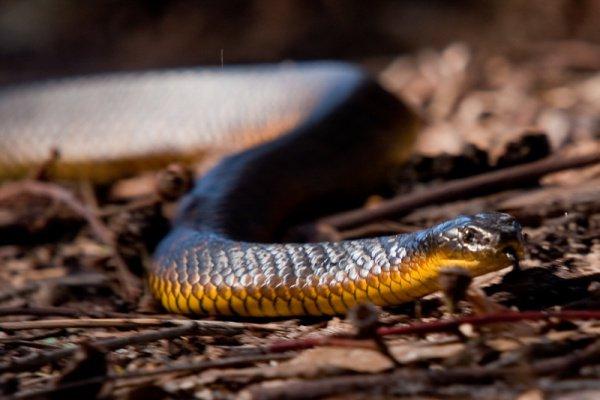Отловленная змея была выпущена на волю