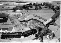 В Тель-Авиве кот остановил движение поездов