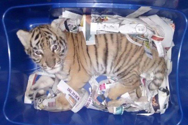 Его изъяли и передали в центр содержания животных