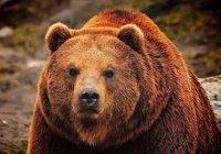 В США мужчина подрался с медведем из-за собаки