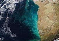 НАСА показало уникальные «молочные вихри» в Каспийском море (ФОТО)