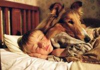 Ученые узнали, когда собака стала другом человека