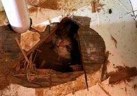 Котенок выжил в смертельной ловушке в США