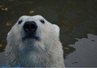 Скончалась самая старая медведица России
