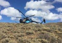 В США вертолет столкнулся с лосем (ФОТО)