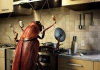 Тараканы научили роботов преодолевать препятствия (ВИДЕО)
