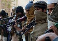 В «Талибане» растет числе европейцев