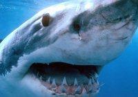 Житель Британии обнаружил акулу у себя в саду