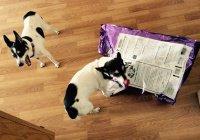 В США средство для эвтаназии нашли в корме для собак