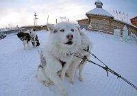Ди Каприо рассказал, где находится самое холодное место на Земле