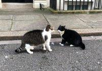 В Британии подрались высокопоставленные коты (ФОТО)
