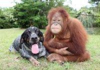 В Колумбии обезьяну усыновила собака (ВИДЕО)