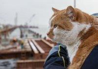 Известного крымского кота Мостика посадили на диету (ФОТО)