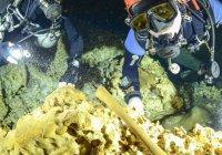 В Мексике нашли человеческие останки возрастом 10 000 лет