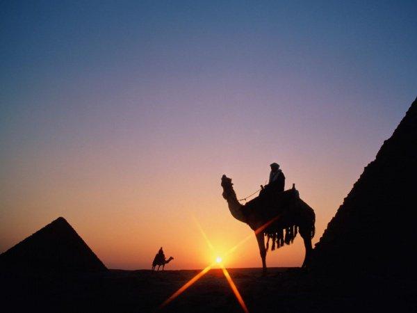 """"""" Раз за разом жребий падал на Абдуллаха. И только с девятого раза жребий выпал на верблюда."""""""