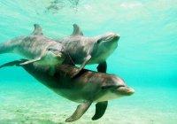 Во Флориде девочка приманивает дельфинов расческой (ВИДЕО)