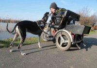 Трехлапый пес спас хозяйку от суицида