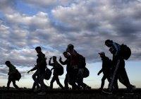 Норвегия приняла больше 20 000 беженцев из Сирии
