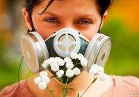 Найден способ спасти людей от аллергии