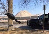 В США мужчина вызвал полицию из-за «дементора»