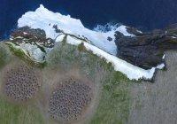 Гигантскую колонию пингвинов запечатлели из космоса (ФОТО)