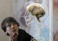Обнаружен способ предотвратить смерть головного мозга