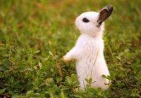 В аэропорту Дублина был спасен замерзший зайчонок