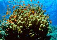Ученые: Гибель кораллов приведет к росту волн в океане