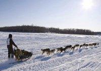 Самая длинная гонка на собачьих упряжках стартовала на Камчатке