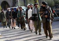 Пентагон объявил о готовности талибов к мирным переговорам