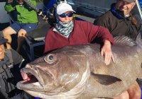 В Австралии старушка поймала рыбу размером с себя (ФОТО)