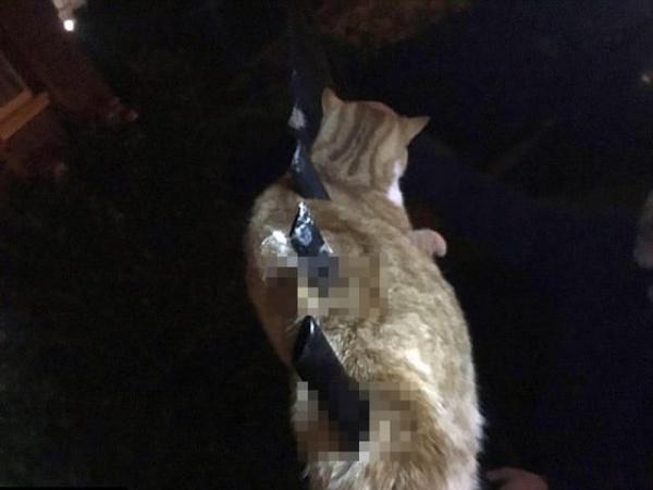 Зоозащитникам так и не удалось узнать, как именно кот оказался на ограждении