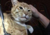 В Лондоне насквозь проткнутый железным забором кот выжил