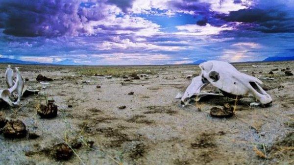 За короткий срок на Земле вымрут больше 40 тысяч видов растений и животных