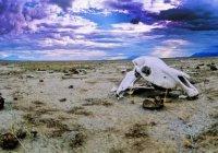 Ученые: Нашей планете грозит глобальное вымирание