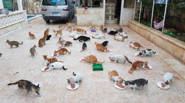 Приют для кошек в Алеппо