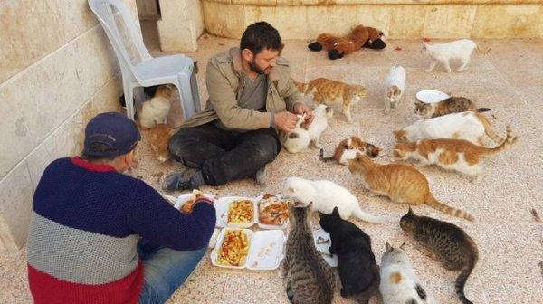 Сириец приютил у себя сотни кошек и спас их от смерти!