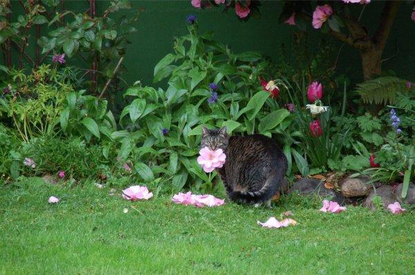 Домашнее животное терпеливо ждет, пока с куста на землю не упадет цветок