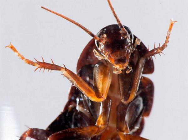 В свою оправдание мужчина заметил, что во всем виноват таракан, которого он хотел поджечь