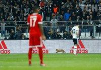 Рыжий кот стал причиной дисциплинарного дела против турецкого футбольного клуба
