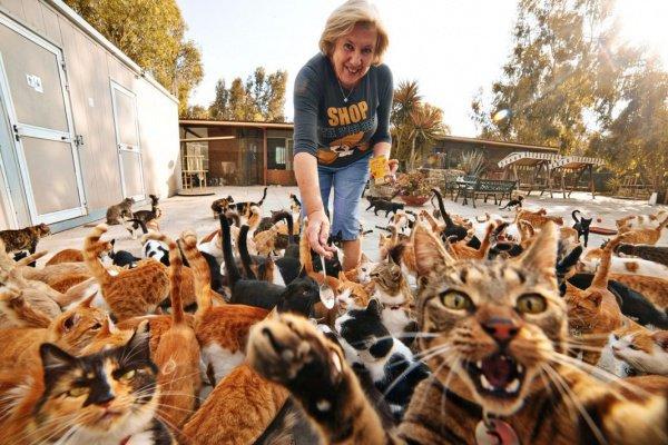 В квартире было в общей сложности 10 животных, но москвич вывез из помещения только 8 питомцев
