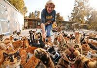 Житель Москвы взял в заложники 8 кошек своей жены
